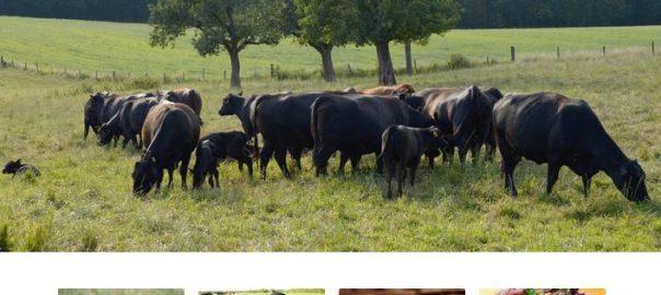Organic Grass Fed Angus Beef